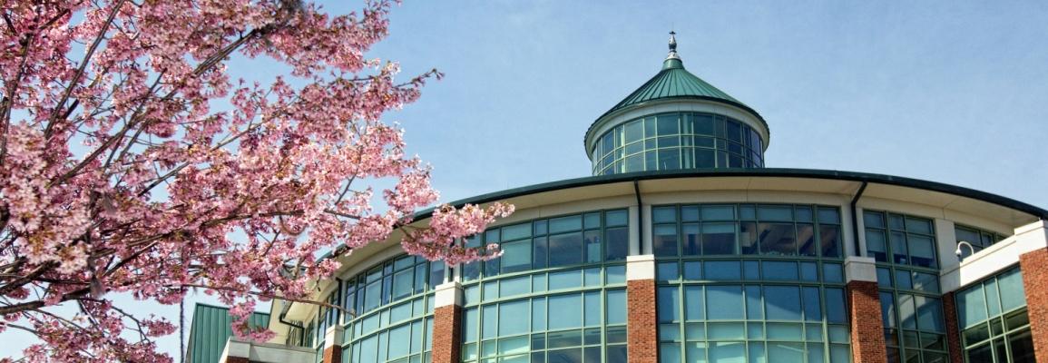 Belk Library in spring